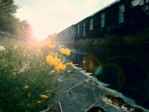 Low angle of a British canal with lens flare and wildflowers.
